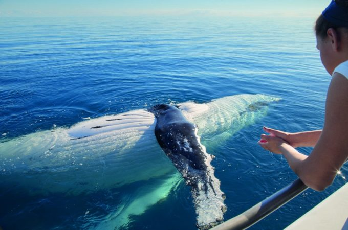 What You Should Know about a Whale Watching Tour