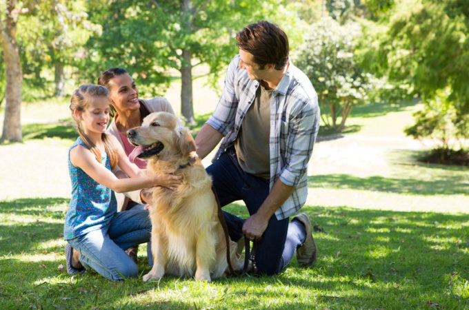 How dogs can help improve your health