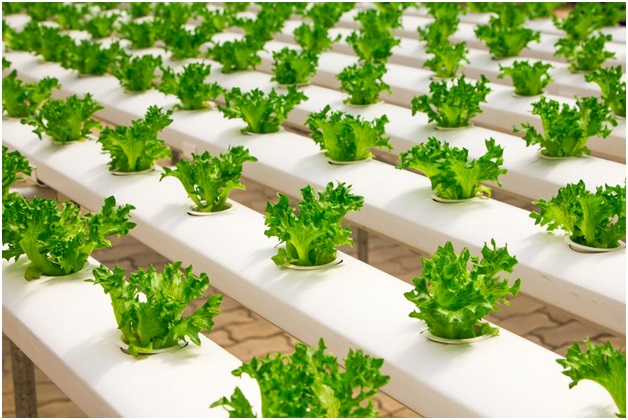 What is Hydroponics and How to Use it?