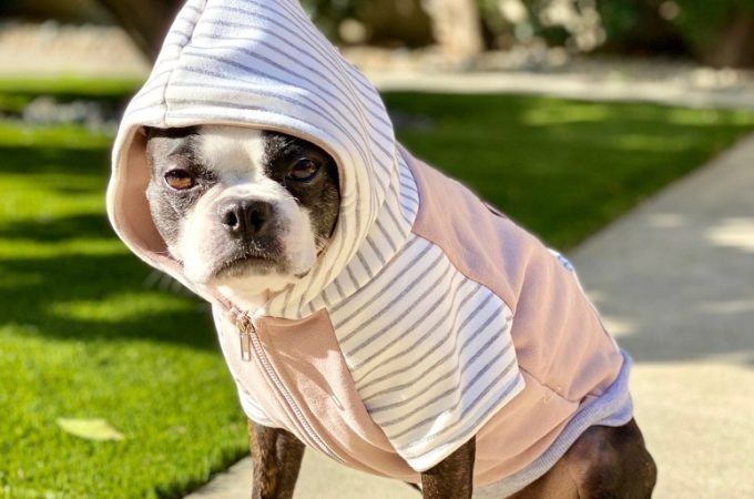French Bulldog Hoodies: A Great Gift For Your Pet