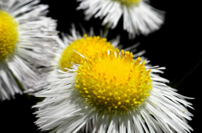 Harnessing The Power of Flowering Plants For Better Health