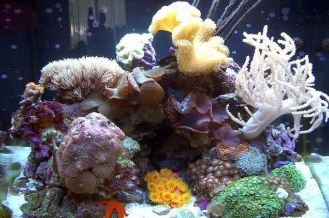 A Beginner's Guide to Set Up an Indoor Coral Reef